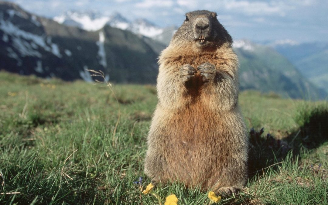 Wildlife in the French Alps